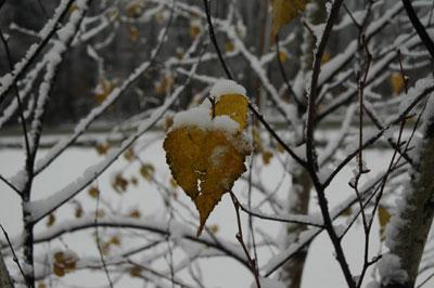 snow2-11206.jpg
