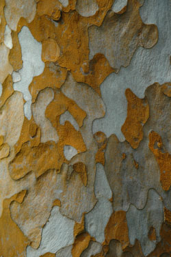 bark of unidentified tree