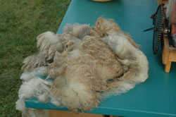 unprocessed fleece