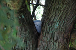 geocache in tree