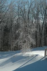ice storm 2/13/08
