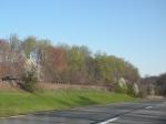 spring trees 2