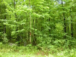 wood lot #3