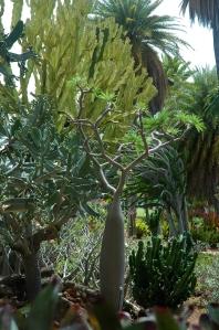 Kapiolani Community College cactus garden