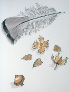 beech pods and seeds, an acorn and a turkey feather