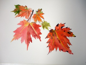 Maple leaves watercolor