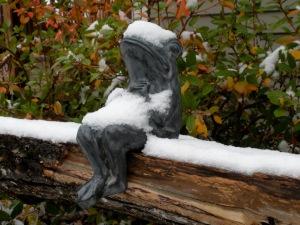 snowy garden frog
