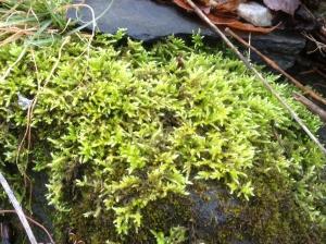 more green moss