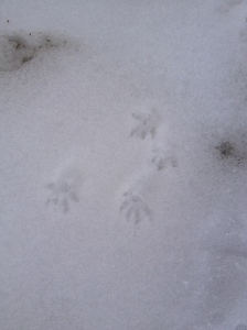 red squirrel prints