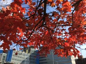 Fall 2013 VT